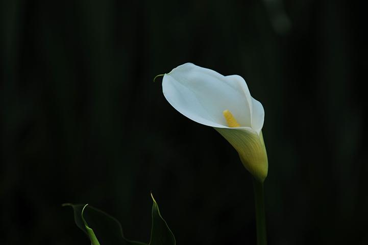 SUN_6631-61-0.jpg