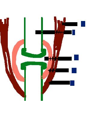 anatomypix.png